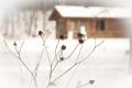 Garten – jetzt auf den Winter vorbereiten